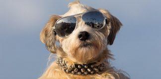 куче сърфист