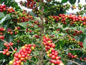 кафе суров вид 2