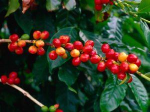 кафе суров вид