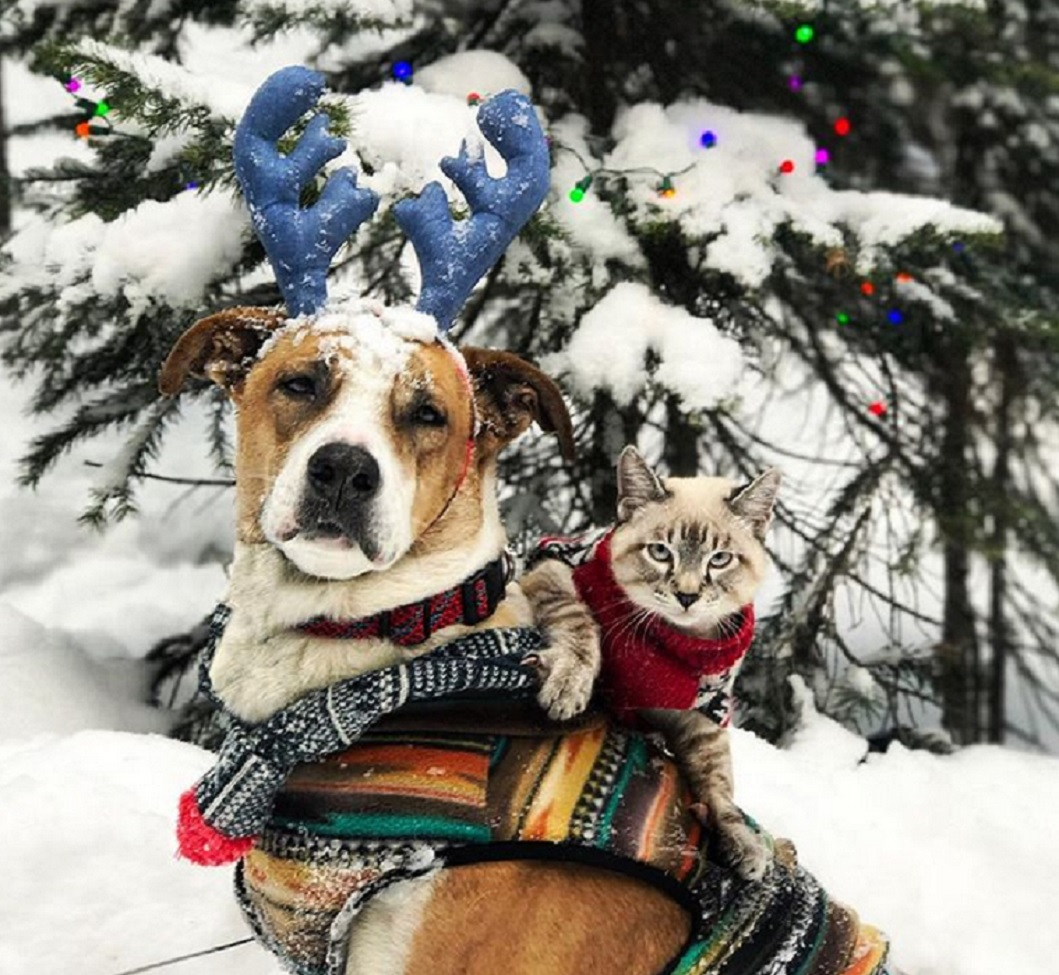 коте и куче