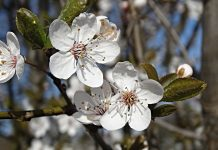 пролет, време, прогноза, температурите