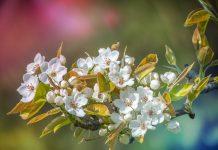 пролет, време, прогноза