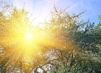 слънчево, температури