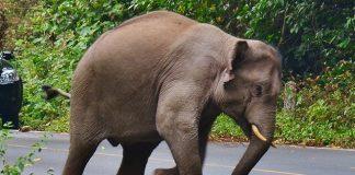 Побеснели слонове размазват брутално бежански лагери