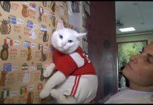 Ахил, котка