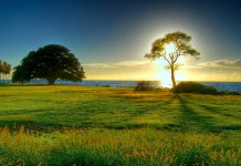 времето, слънчево, слънце