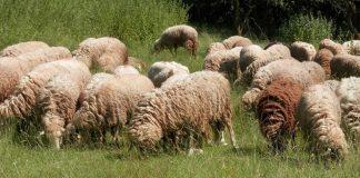 Дългоочакваната втора проба за чума по животните в странджанското село Болярово ще бъде взета тази сутрин. Повтор