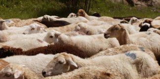 Започва изплащането на обезщетенията за евтаназираните животни в Ямболско и Бургаско. Очаква се сумата да е около 150 лева на животно