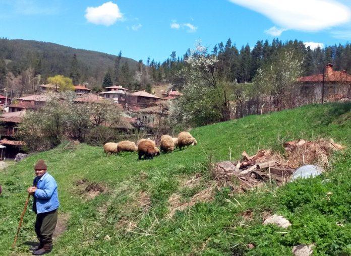овцевъди