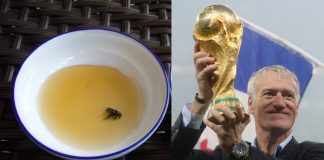honey-world cup