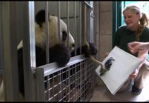 Panda_paint