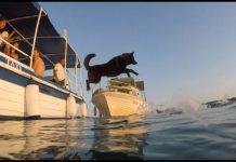 dog_swim