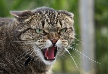 angry-cats-_