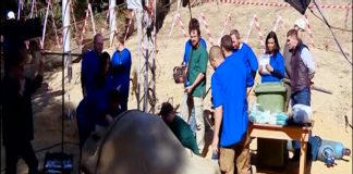 Elephant_surgery