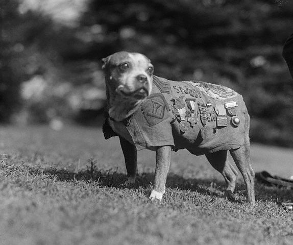 куче война