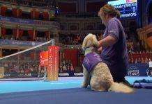 кучета, тенис