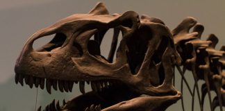 динозавър, фосил