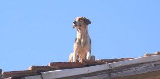 куче, покрив