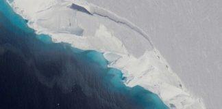 Антарктида, растения