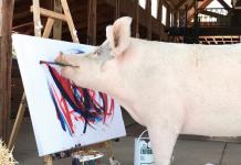 свиня, Пигкасо, художник
