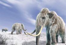 изчезнали видове