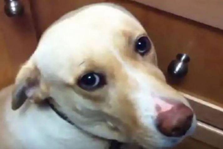 куче, стрес