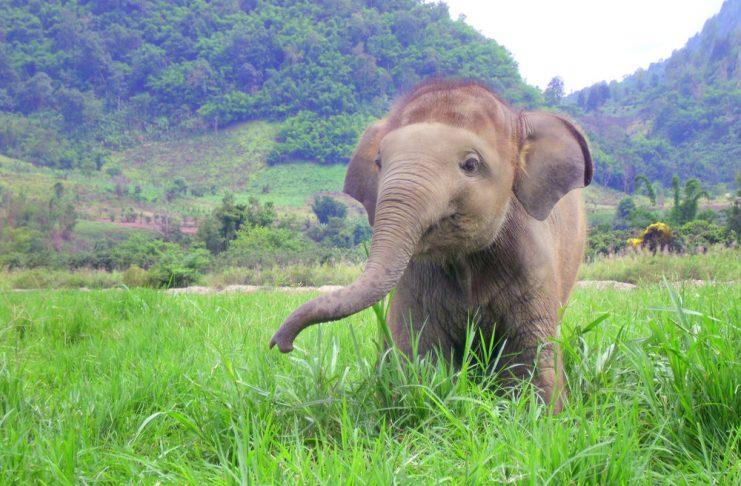слончета