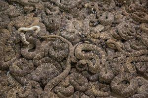 Островът на змиите