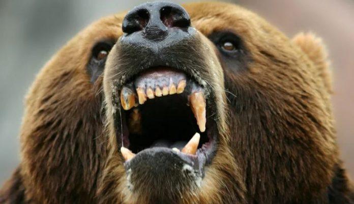 мечка-стравница