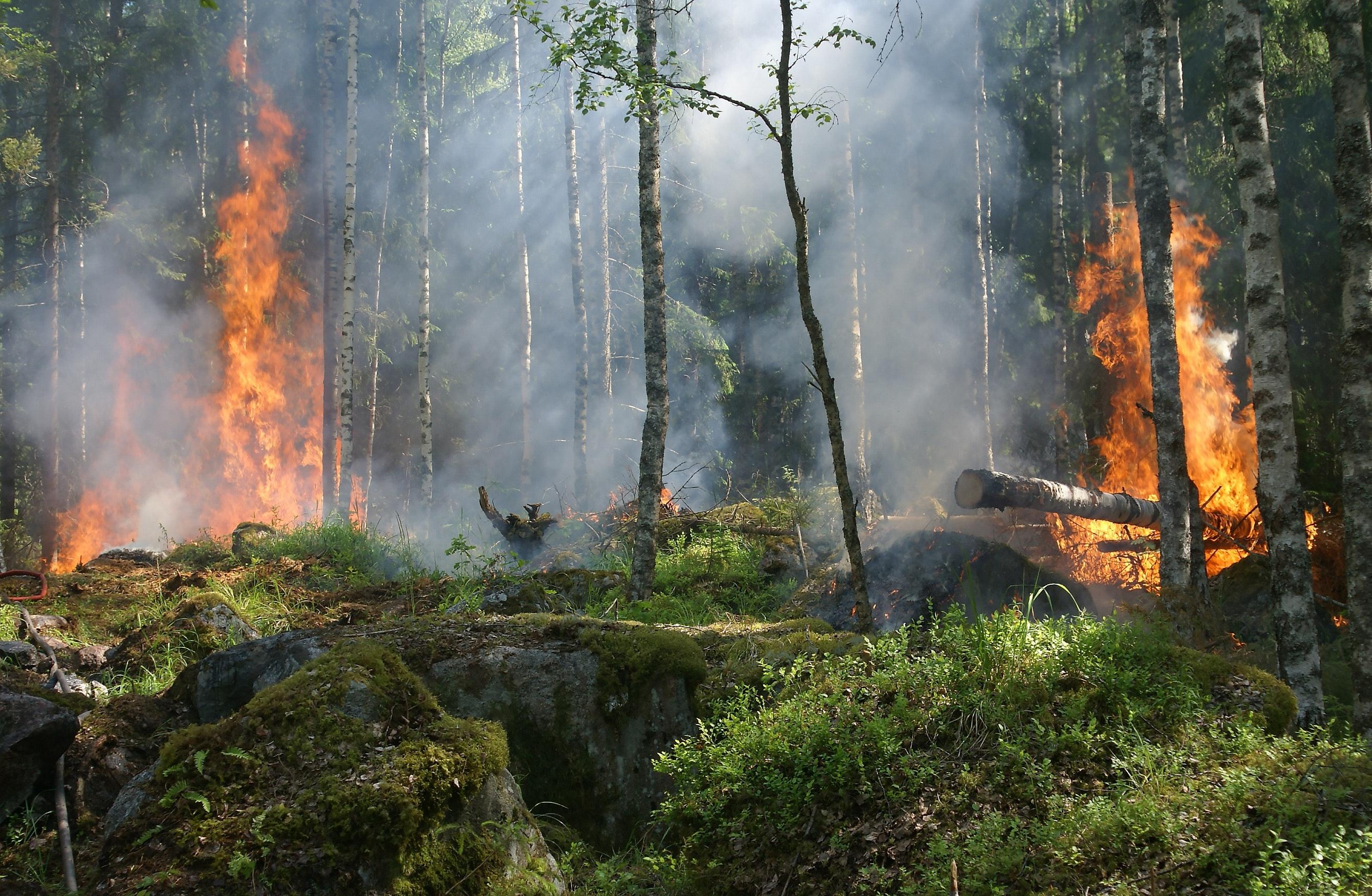 Пламна гората над Реброво