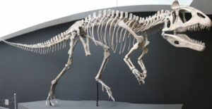 динозавър, Антарктика
