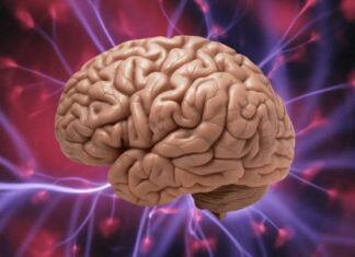 мозък, тъкани, съживяване