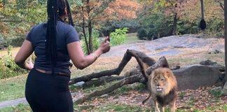 Нюйоркската полиция издирва посетителка на зоопарка в Бронкс, танцувала на лъва