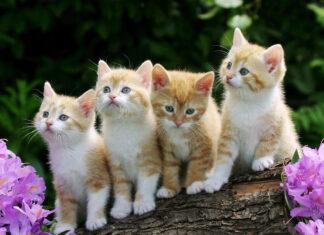 изложба на котки