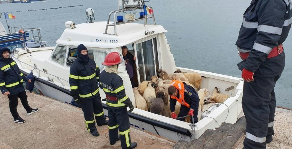 овце, Румъния, кораб