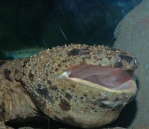 ханзаки, чудовище, саламандър