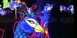 фестивал, птици