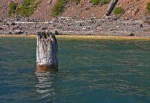 дърво, Орегон, езеро