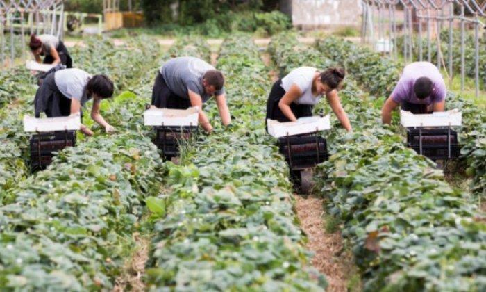 селско стопанство