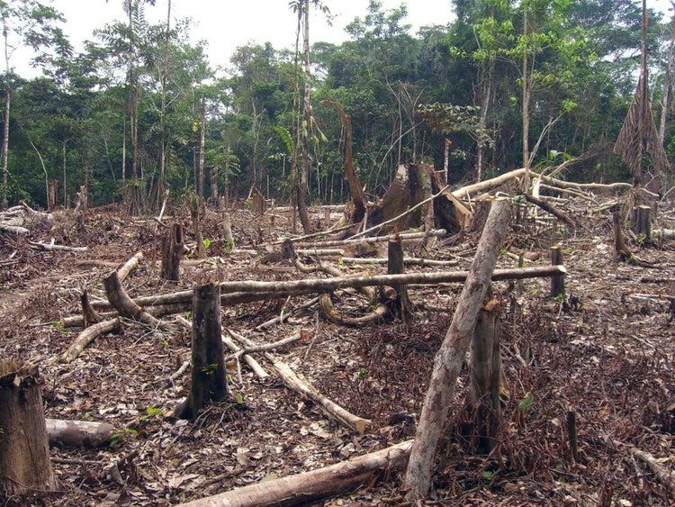 Амазонска джунгла