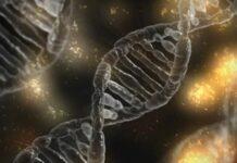 дълголетие, мутации