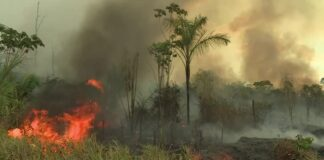 Пожар в Амазонската екваториална гора
