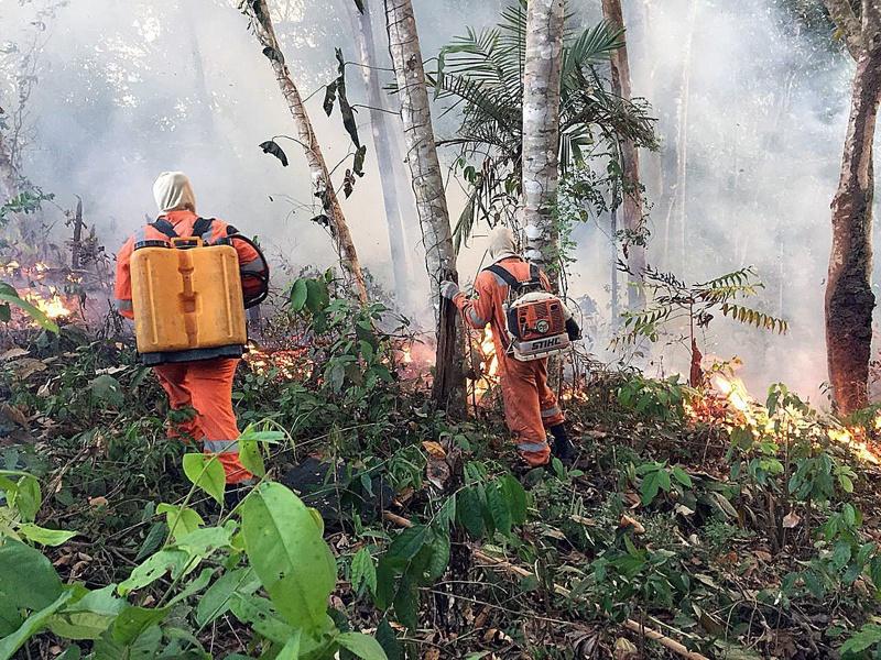 Амазония пожари
