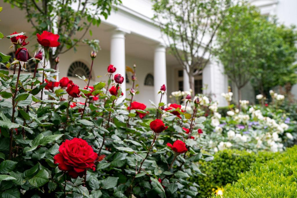 Розовата градина в Белия дом