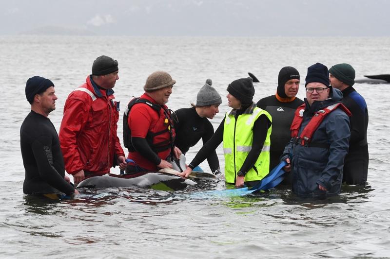 Спасяване на китове