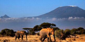 Килиманджаро пожар
