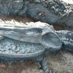 скелет на кит