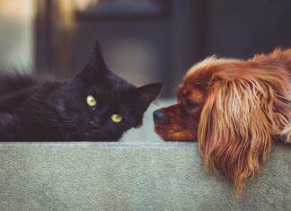 котка, куче