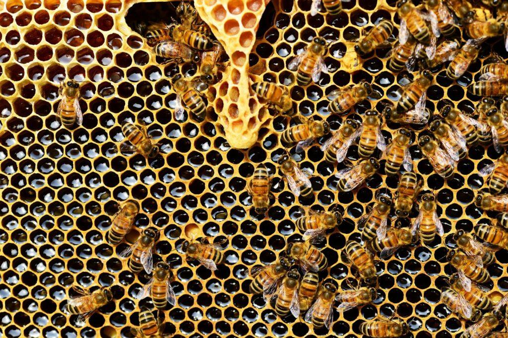 пчели,мед