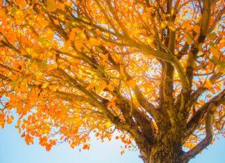 слънчево време слънце есен